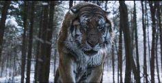 The Tiger secventa 2